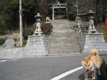 桜八幡神社2