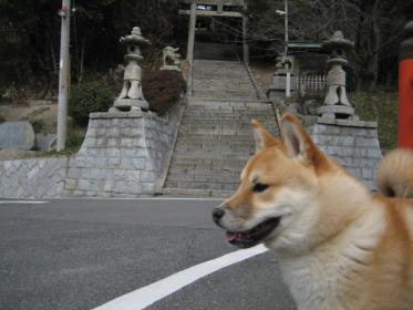 桜八幡神社3