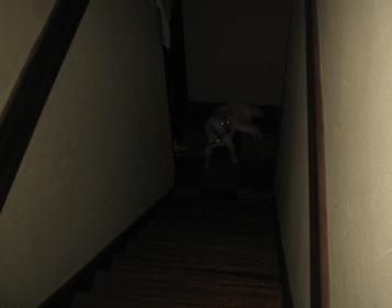 闇に何か居る!