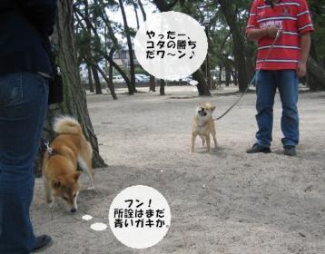 コタ君紫苑君対決3