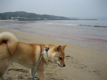 浜辺にて2