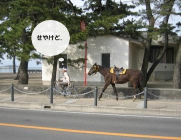 馬とおじさん2
