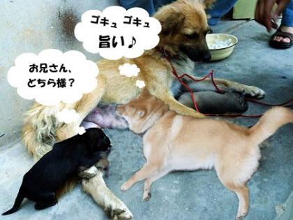 ヤッホーニュースより
