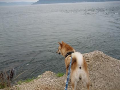 ビビリ犬2