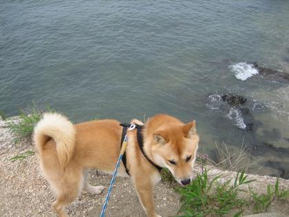 ビビリ犬3