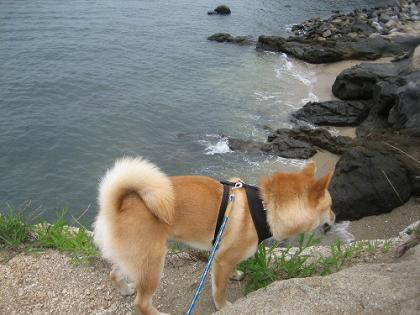 ビビリ犬4