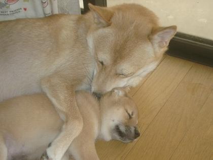 ママに抱っこされて