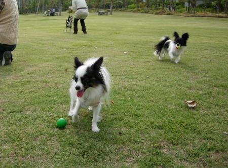 モモちゃんはボール好きっ子