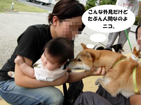 ニコやんと遥姫2