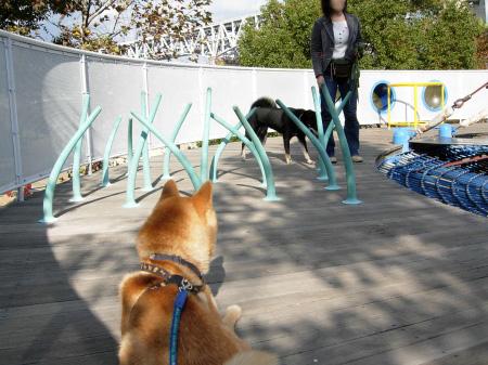 でも気が付くと意識しあう2犬