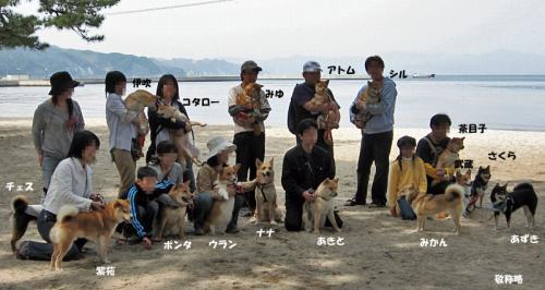 大浜公園で出会ったワンコと飼い主さんたち