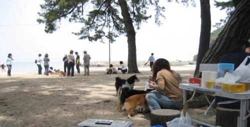 大浜海岸イメージ2