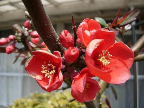 赤い花(名称不明)