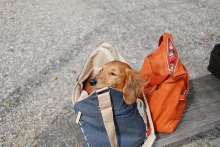 ナナさんinバッグ