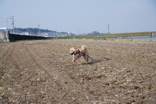 飛行犬を撮るのは難しい~