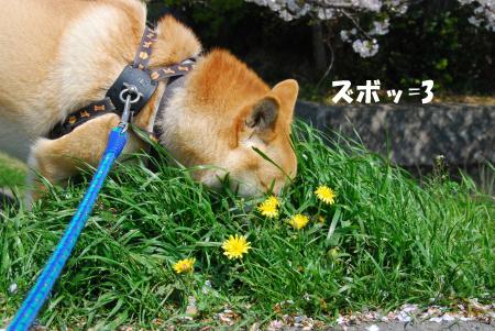 花より匂い嗅ぎ