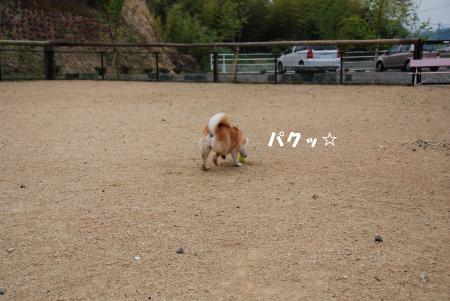 ニコやんがボールを追いかけるなんて!