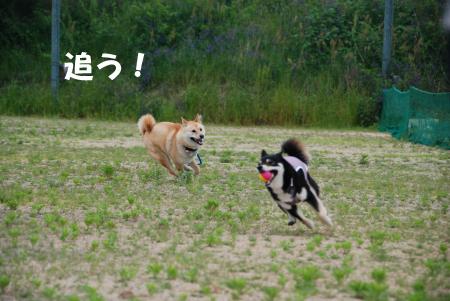 追う追う追う!!!