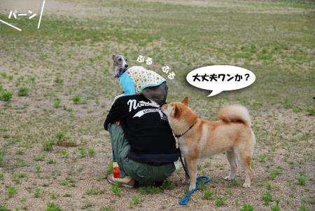 杏ちゃん、肩へ飛び乗るんです!