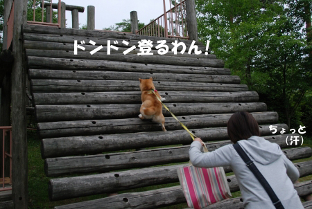 すごい勢いで登るニコやん