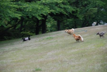 ニコやんが写ってないけど、皆で走るの図
