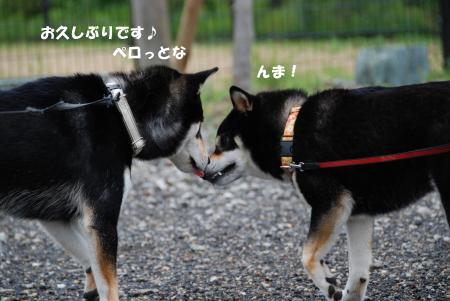 ああ!ロールちゃんの見てる前で!!