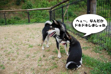 さすが兄と同居してるだけあり、犬見知りせず♪