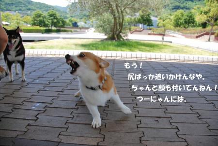 キレたつ~にゃん