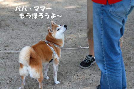 犬が苦手な子 その1