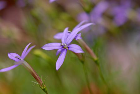 小さい花(直径が一円玉くらいの)