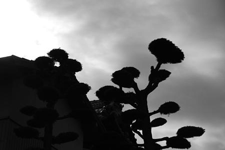 人様の御宅の庭木