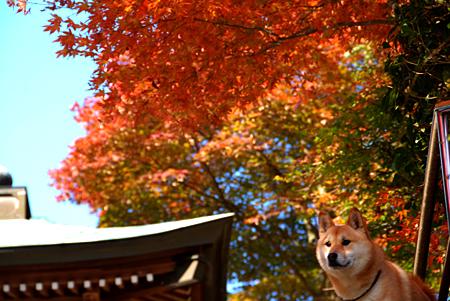 『そうだ、京都へ行こう』 byJR西日本 ちっく