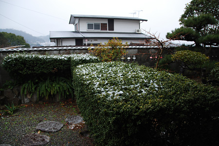 久々に雪の朝