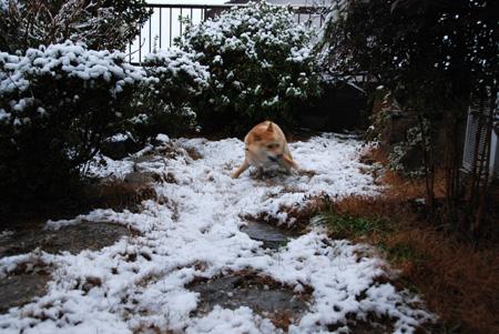 大興奮なのは雪のせいか?