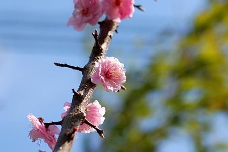 桜が咲こうかというのに・・・