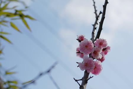 未だに梅の画像をアップしてる我がブログ