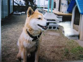 先代犬チャッピー