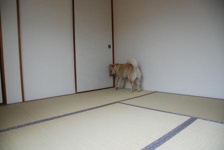 和室に放ってみた!