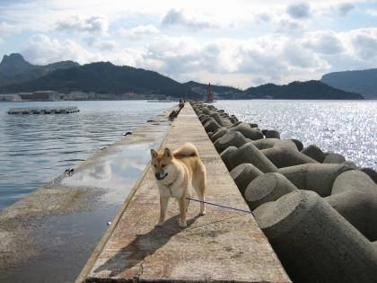 堤防の原画