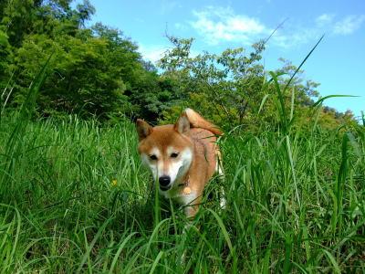 茂みを走る!