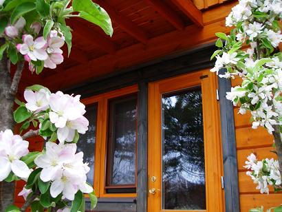 リンゴの花(5月)