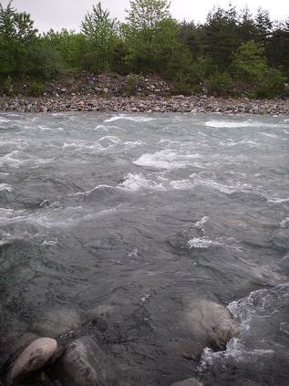 近所の川(2009年5月24日) その2