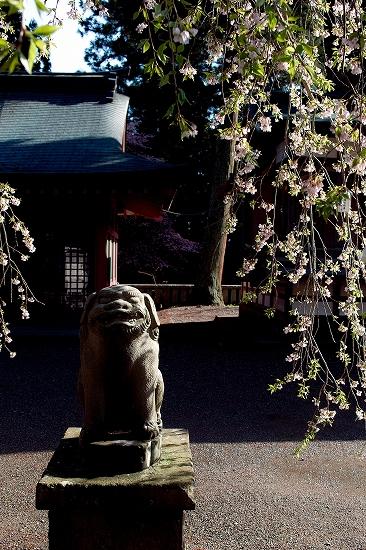 狛犬と葉桜_SDIM3980