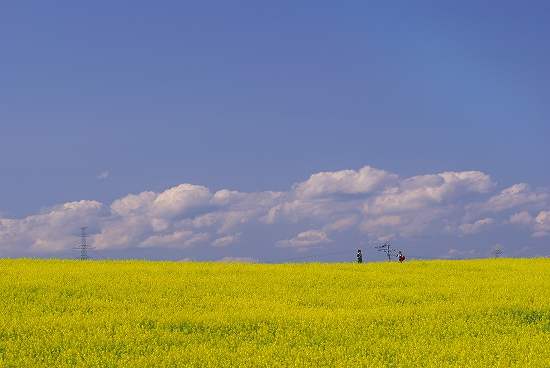 黄色のじゅうたん_DSC05933