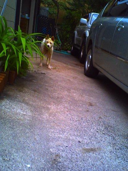 PICT0150_犬