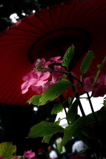 番傘と_SDIM5762