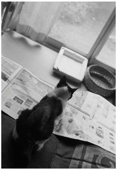 新聞読んでるわけではない
