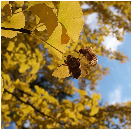 秋と夏_SDIM6296