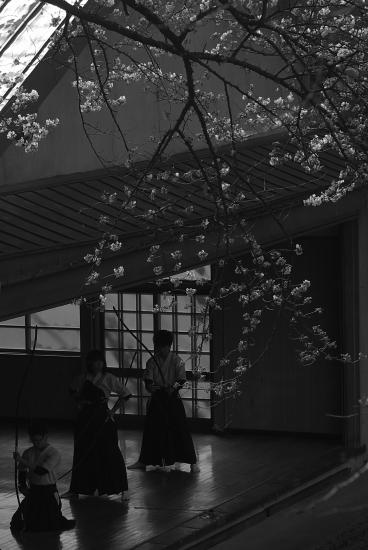 桜下_DSC08687