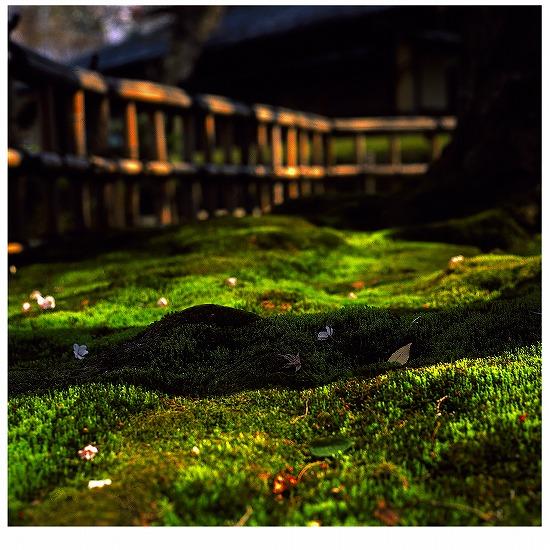 秋と春の出会い_EPSON326